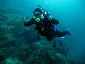 Menyelam di Karimunjawa, Diving di Karimunjawa