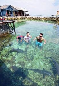 Penangkaran hiu karimunjawa, Penangkaran hiu karimun jawa